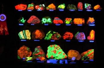 Bio-luminescence and bio-fluorescence